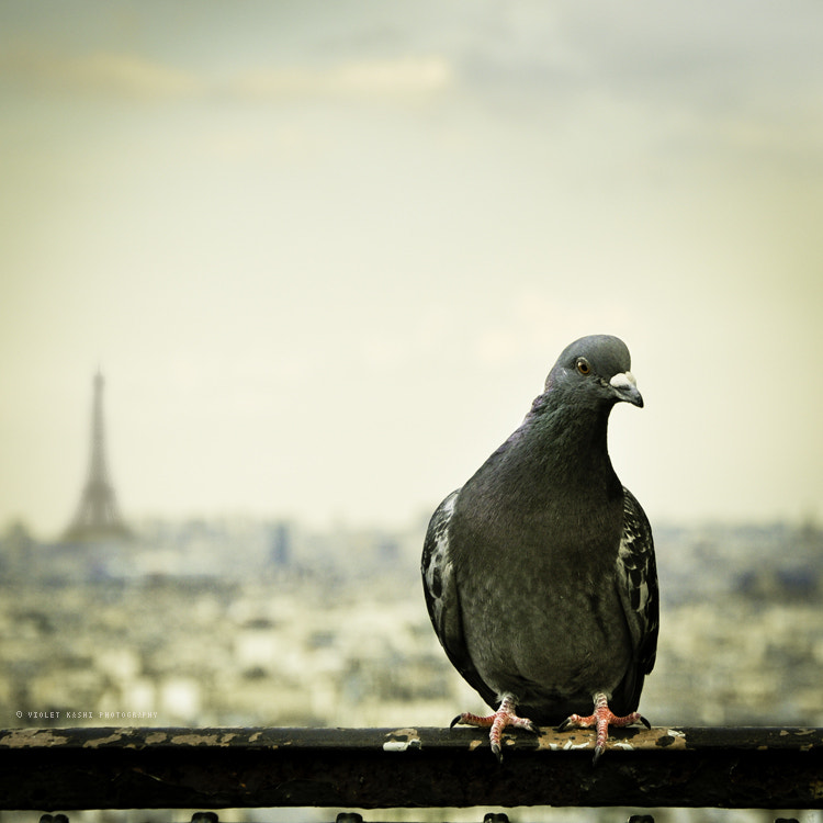 Photograph Bonjour! by Violet  Kashi on 500px