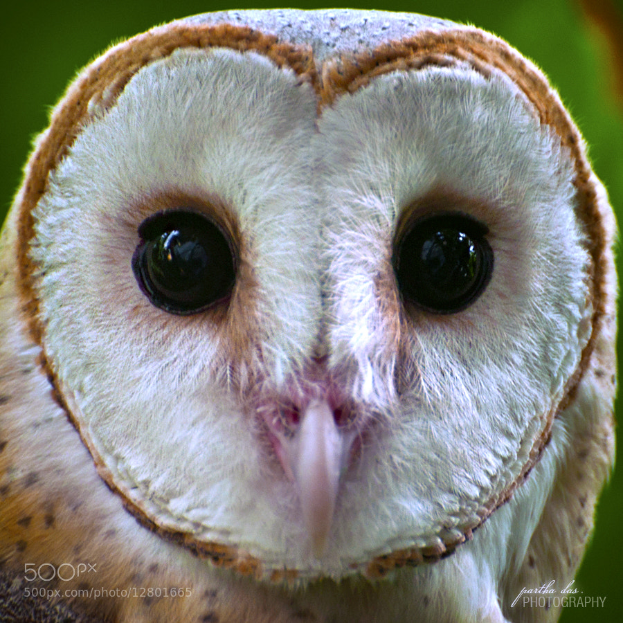 Photograph look into my eyes! by Partha Das on 500px