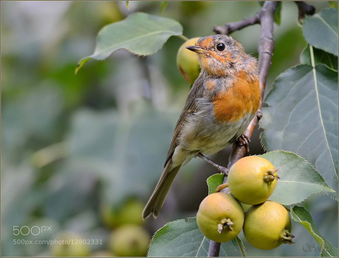 Photograph In a pear kingdom by Anna Golubeva on 500px