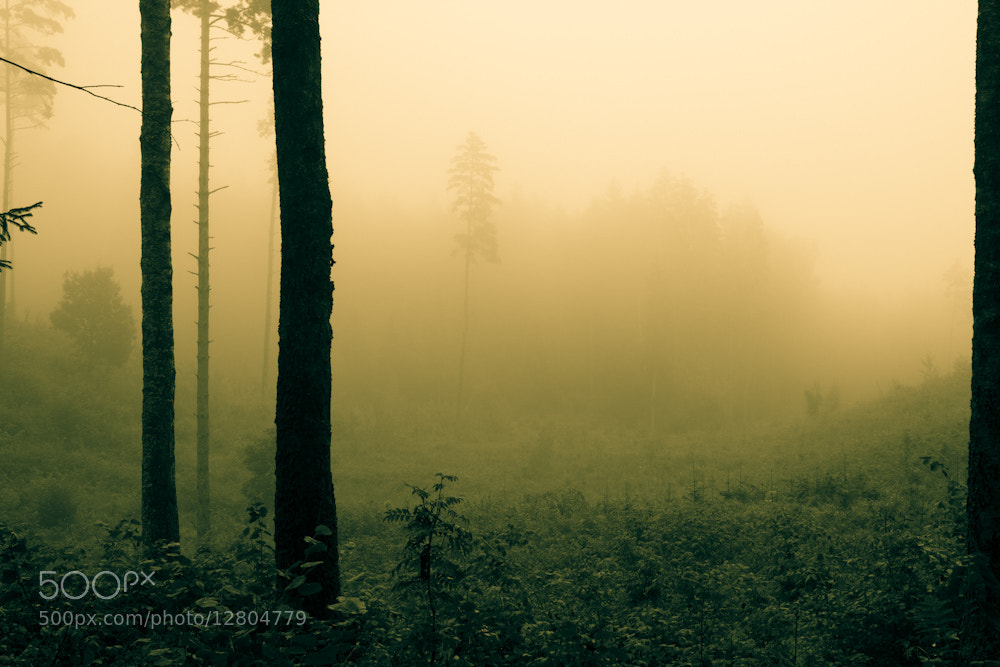 Photograph Mist by Mindaugas Ma on 500px