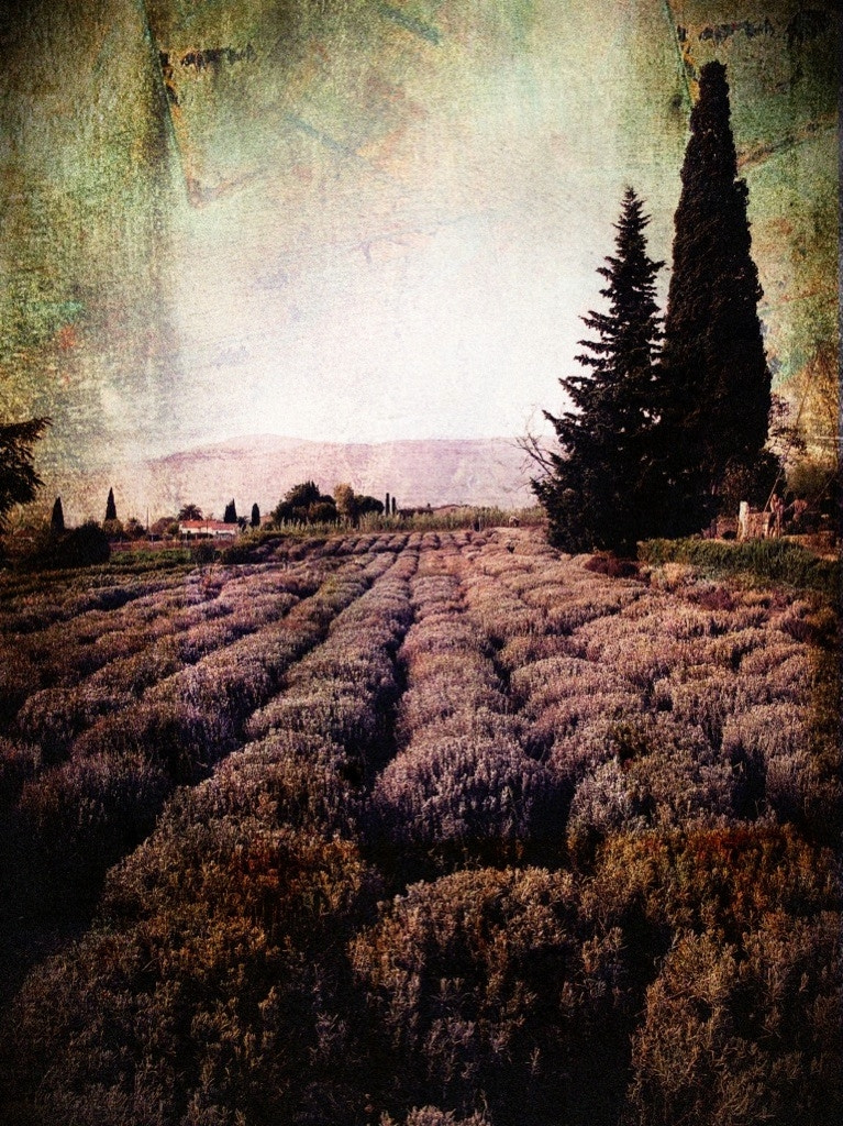 Photograph lavander fields forever by Beau Rivage on 500px