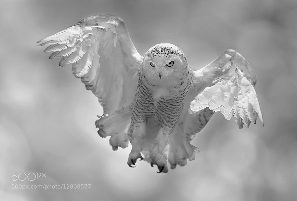 Photograph to fly by Stefano Ronchi on 500px