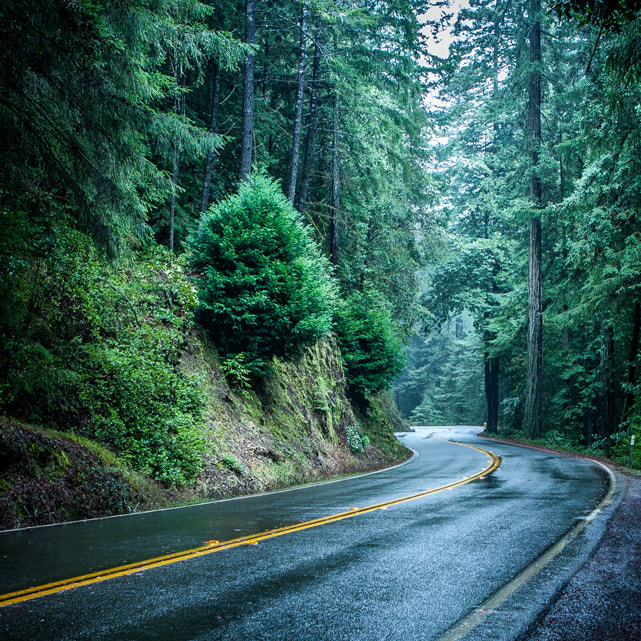 Photograph Redwood Road - Northern California by Dave Pluimer on 500px