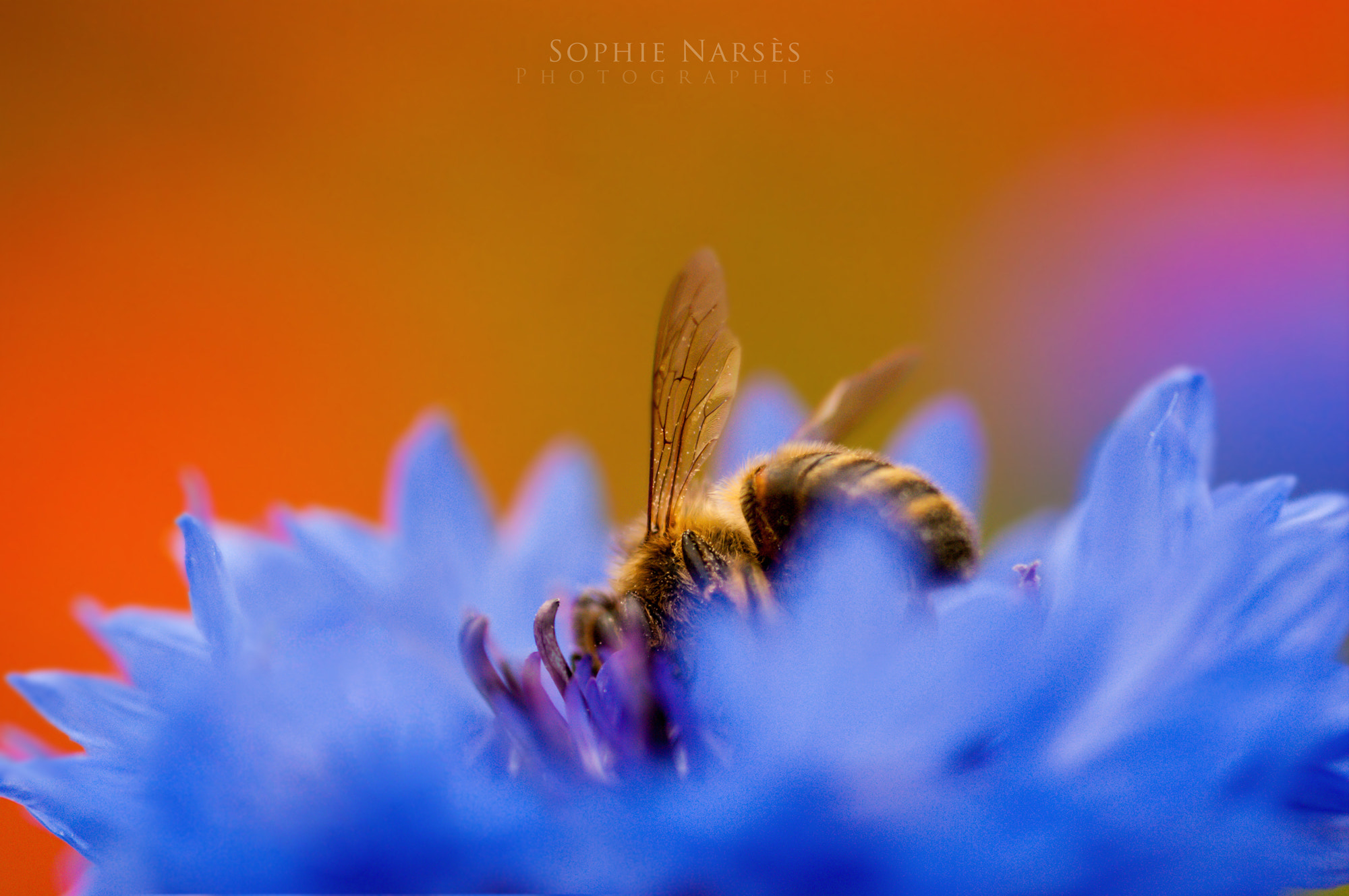 Photograph Dance with me into the colors by Sophie Narses on 500px