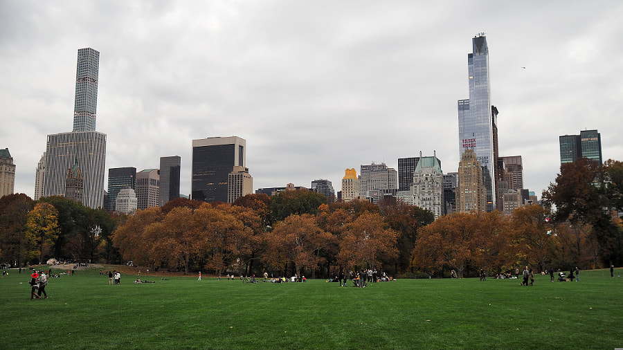 Great Lawn (and some Skyline) by Nancy Lundebjerg on 500px.com