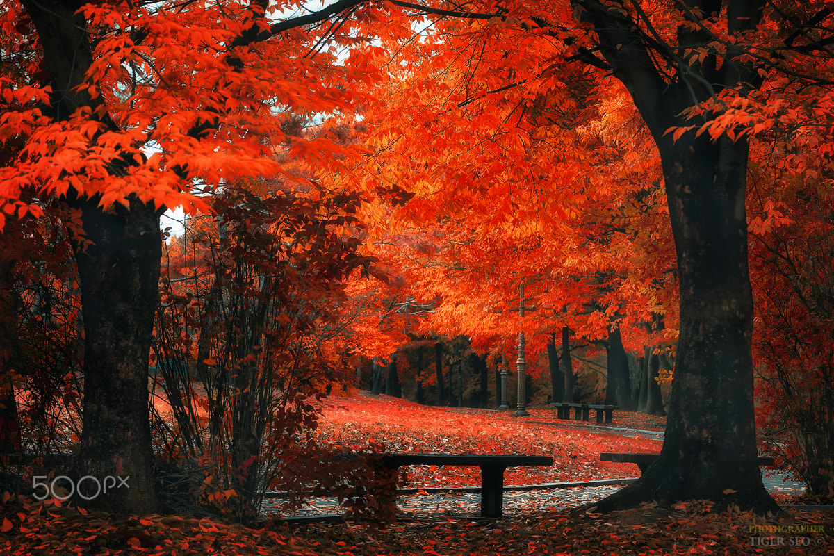 Bench under the red