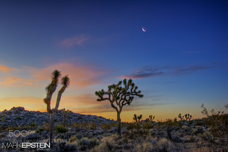 Photograph Joshua Tree at Dawn by Mark Epstein on 500px