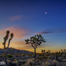 Joshua Tree at Dawn by Mark Epstein (markepsteinphoto)) on 500px.com