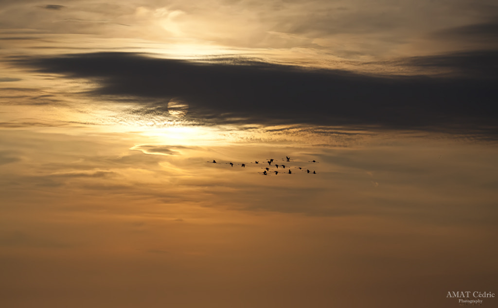 Photograph Migration by cedric amat on 500px