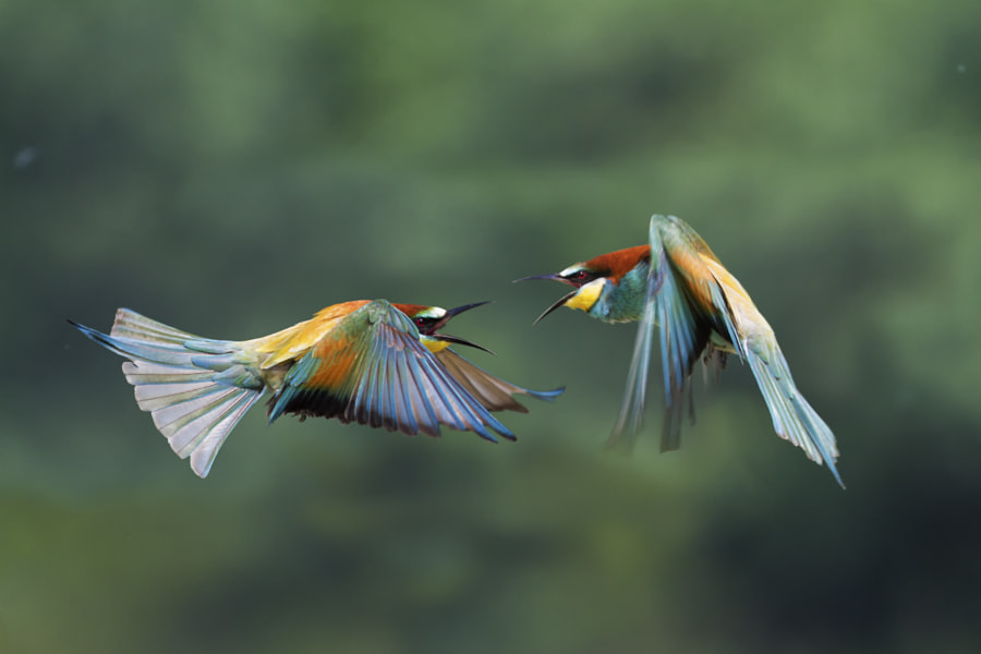 Fight between rainbows 5 by Marco Redaelli on 500px.com
