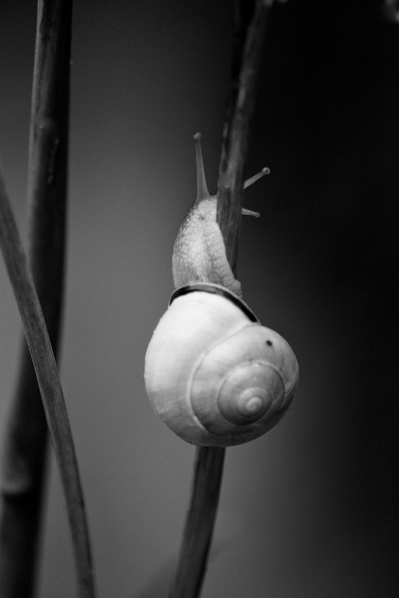 Photograph Mr or Mrs Snail. by Aline K. on 500px