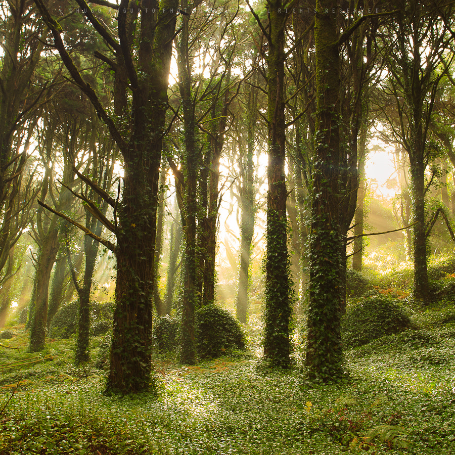 Photograph Magical Forest by Hugo Augusto on 500px