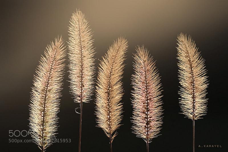 Photograph Golden spike.. by karayelim on 500px