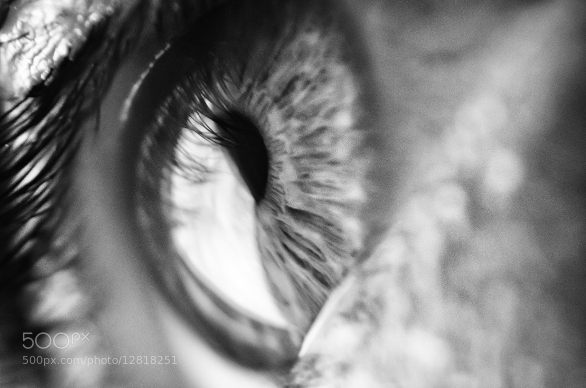 Photograph The Soul by Diana Martins on 500px