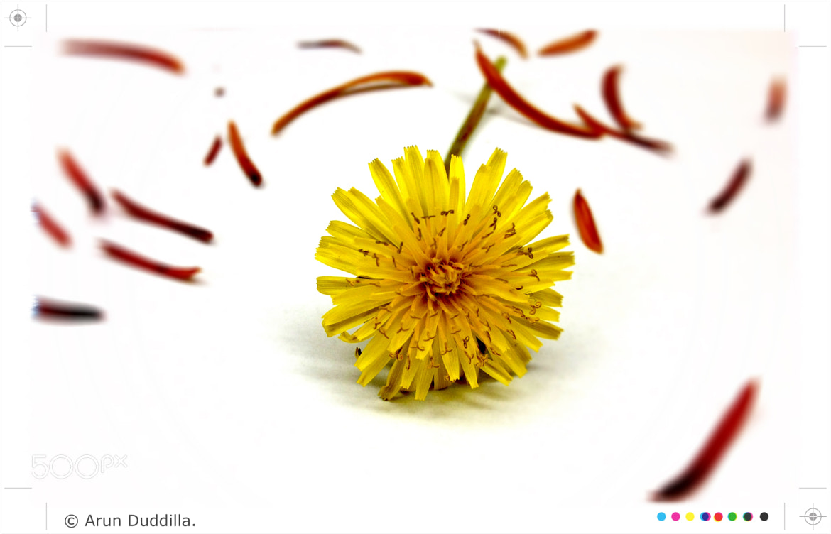 Photograph Yellow on white by Arun Kumar Duddilla on 500px