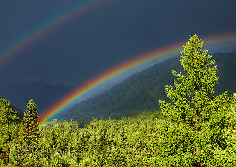 Rainbow over forest by muha0445