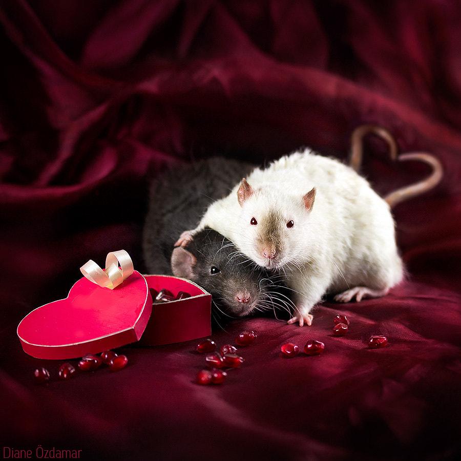 Would you be my Valentine? by Diane Özdamar on 500px.com