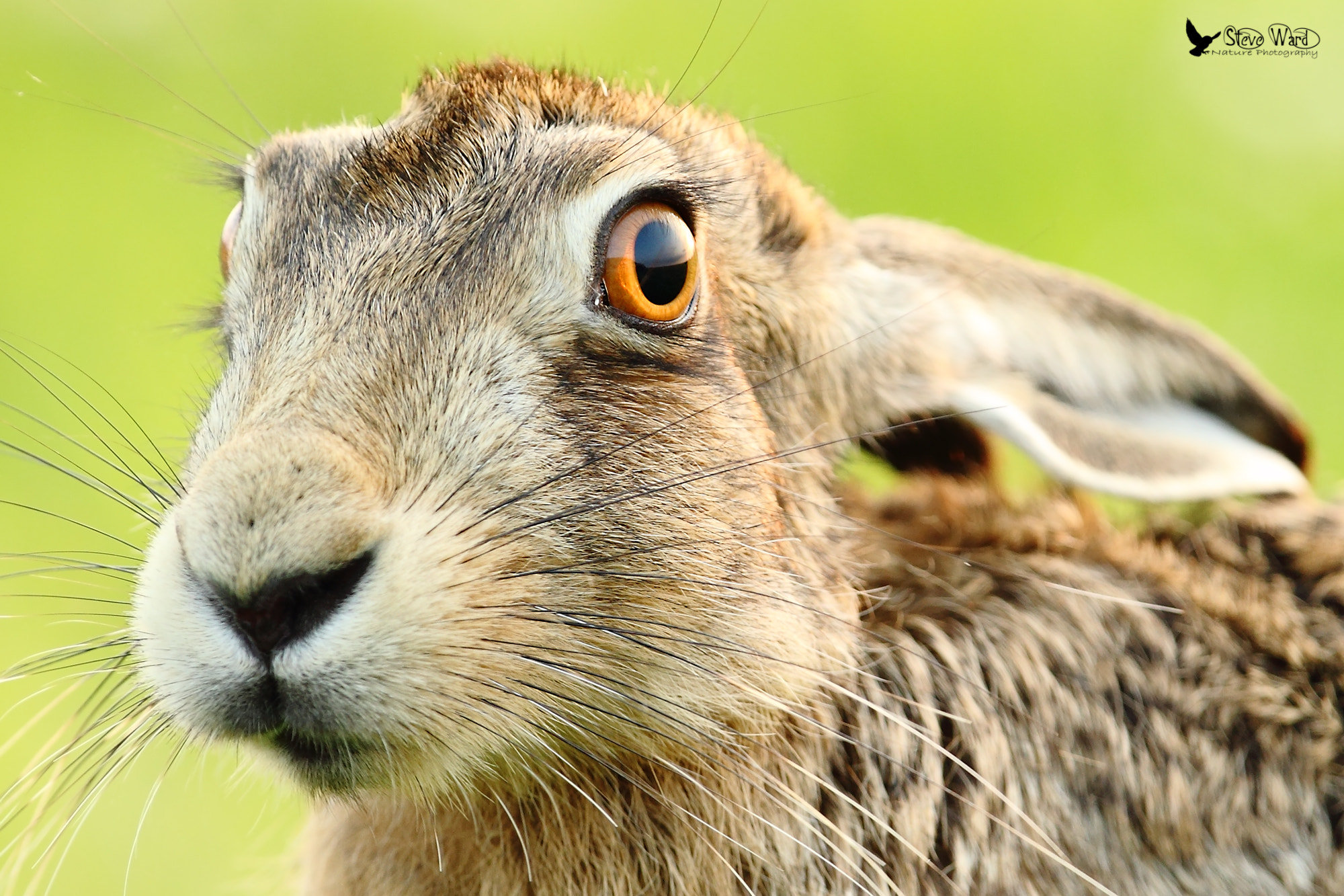 Photograph There's a hare in my eye by Steven Ward  on 500px