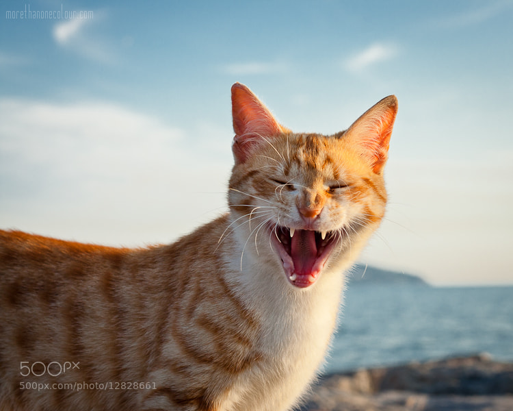 Photograph Animal instinct by Magmyska . on 500px