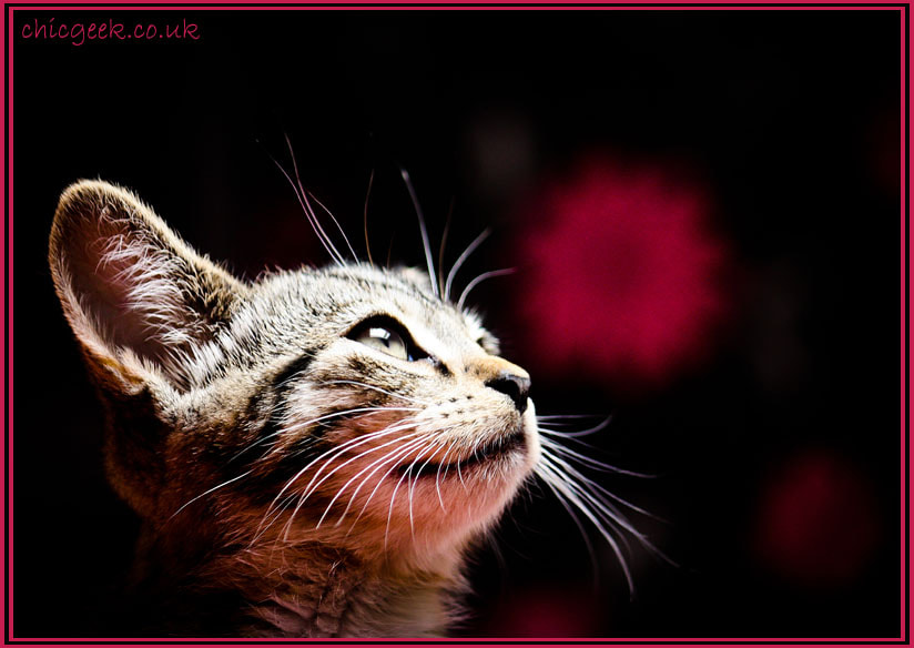 Photograph Lola by Kitty Wilkinson on 500px