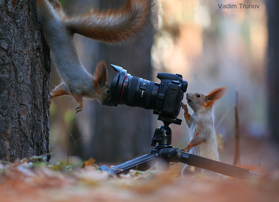 Closer look straight at the camera! by Vadim Trunov on 500px.com