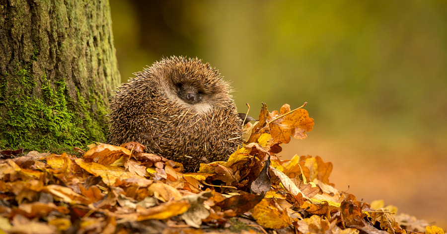 chilled by Mark Bridger on 500px.com