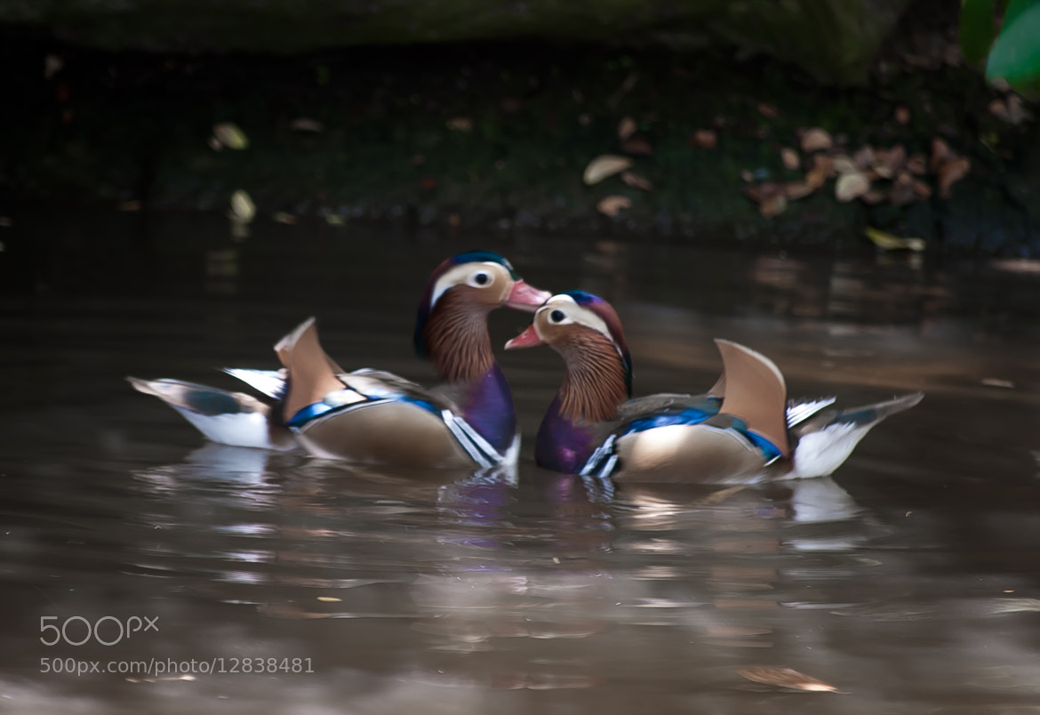Photograph Kissing by Charlz Photography on 500px