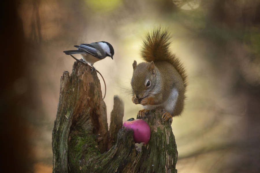 Deux amis by Andre Villeneuve on 500px.com