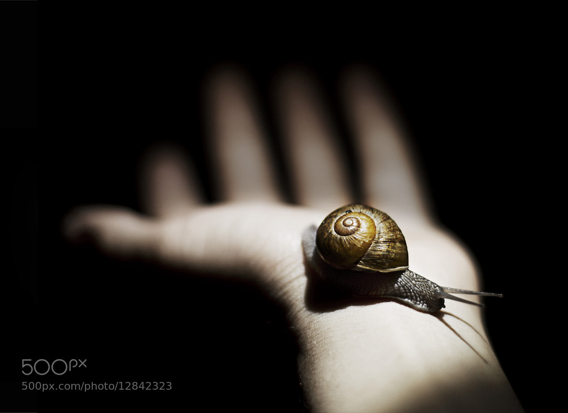 Photograph Snail by Omalix Martinez on 500px
