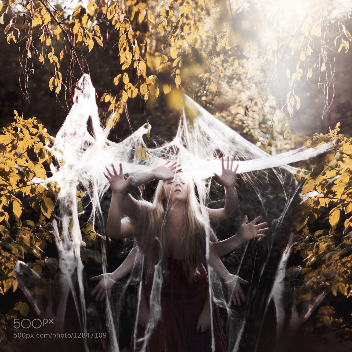 Photograph what tangled webs we weave. by Nicole Belke on 500px