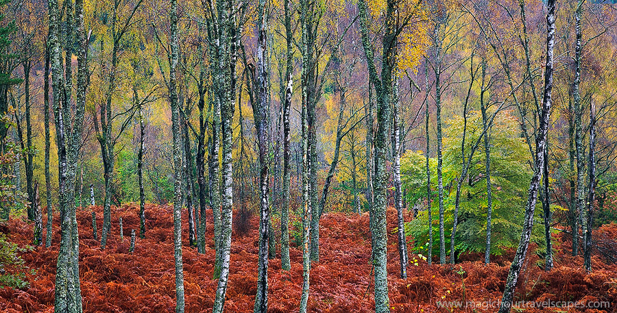 Photograph Autumn Textures by Kah Kit Yoong on 500px