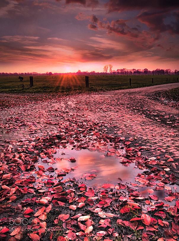 Photograph after rain comes... by Patrick Strik on 500px
