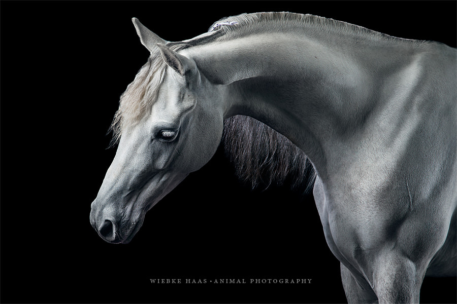 horse photography - Marble by Wiebke Haas on 500px.com