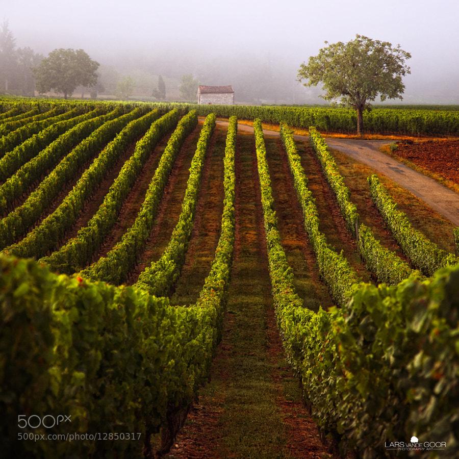 Photograph a walk through the vineyard II by Lars van de Goor on 500px