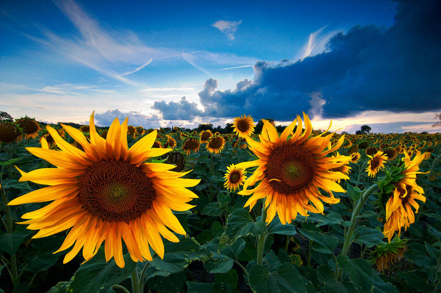Photograph Little suns by Thomas Baillieux on 500px