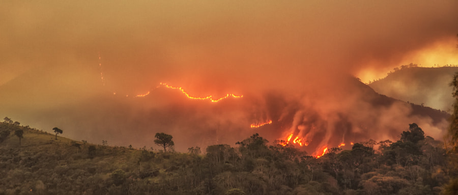 The tree and the wildfire by Pedro Bessa on 500px.com