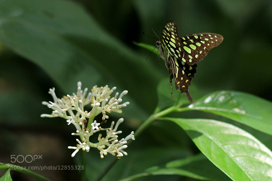 Photograph Nectar Hunter by Bimal Roy on 500px