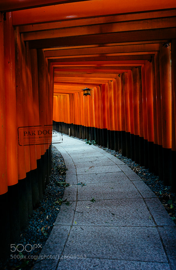 Torii path at Fushimi Inari. Japan