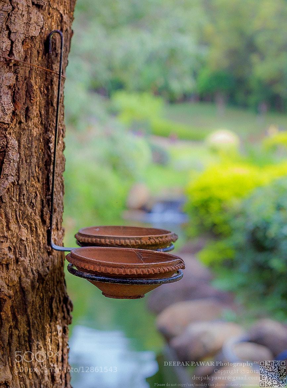 Photograph Bird feeders in PLD garden, Pune by Deepak Pawar on 500px