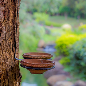 Bird feeders in PLD garden, Pune by Deepak Pawar (dpphotos)) on 500px.com