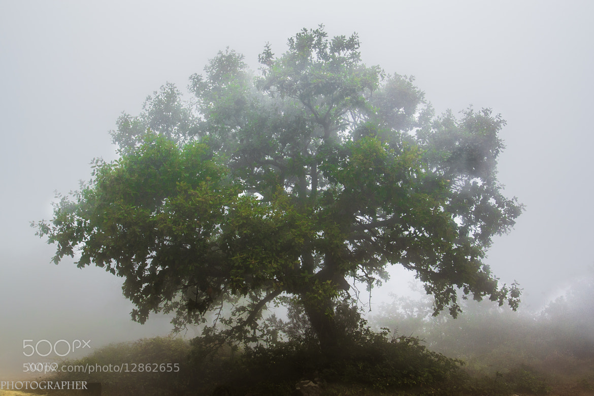 Photograph Arbol y niebla by IVAN JIMENEZ GONZALEZ on 500px