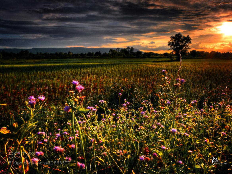 Photograph SUNSET III by Kim Thong Zuk  on 500px