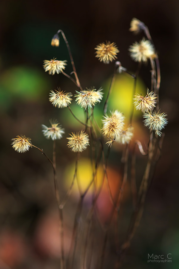 Fall flowers de MarcC photographies sur 500px.com