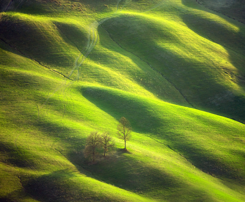 Photograph Trees by Marcin Sobas on 500px