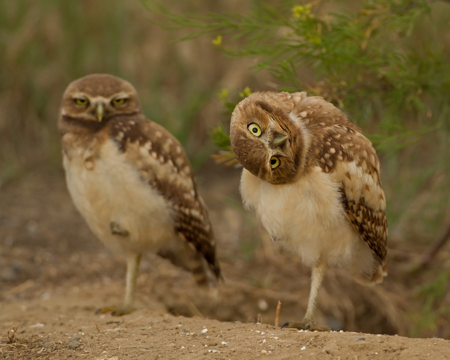 Photograph And You Are? by Henrik Nilsson on 500px