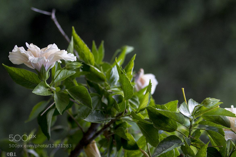 Photograph Flores y hojas by Bernardo Iribarnegaray on 500px