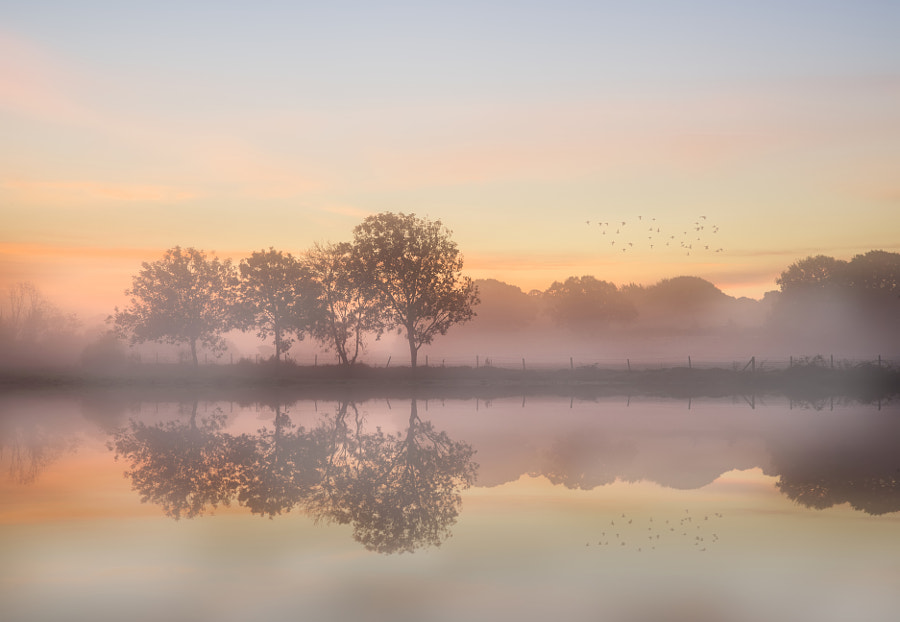 Stunning vibrant Autumn foggy sunrise English countryside landsc by Matt Gibson on 500px.com