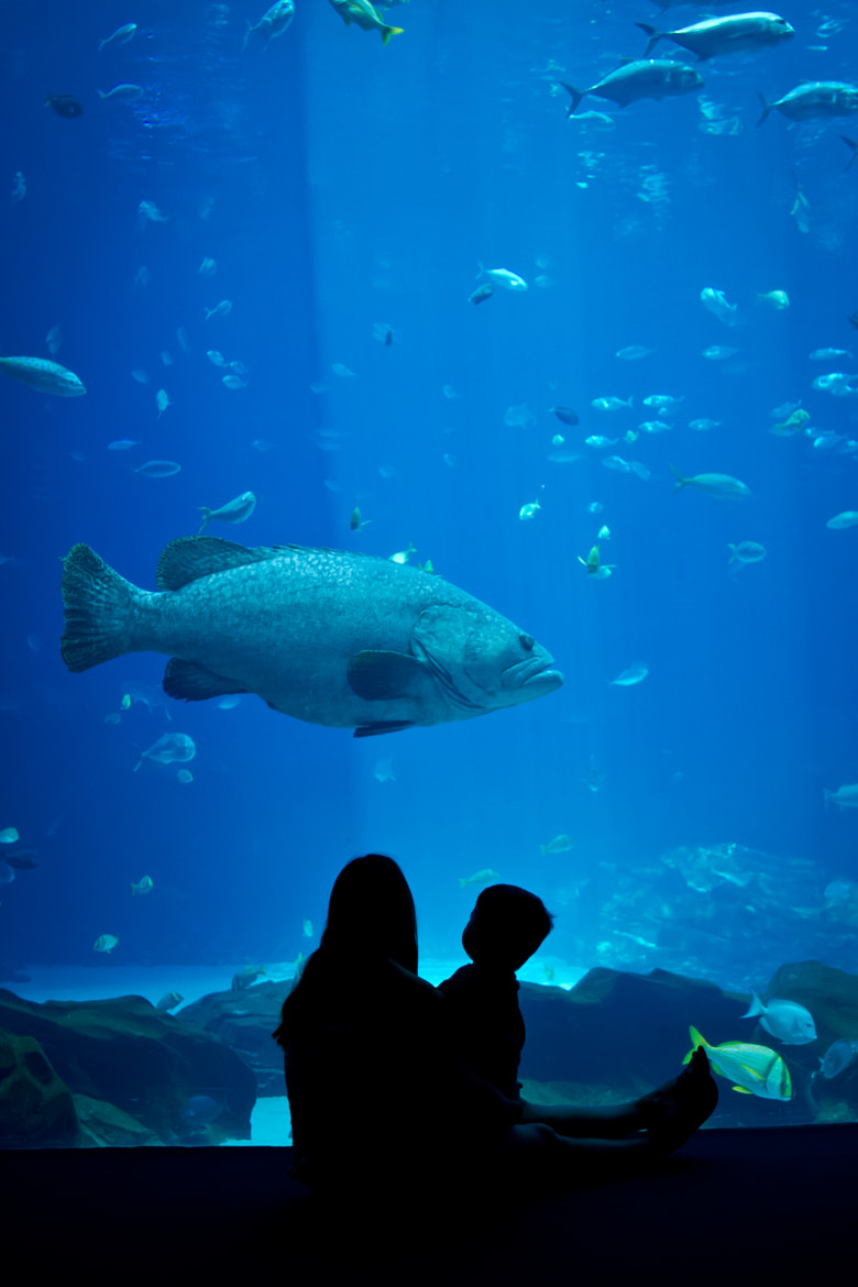 Photograph Family Portrait with Grouper by Jason Groepper on 500px