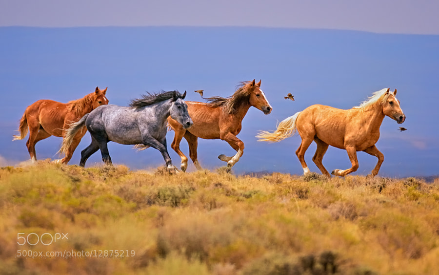 Photograph Wild Equine Exuberance by Michael Menefee on 500px