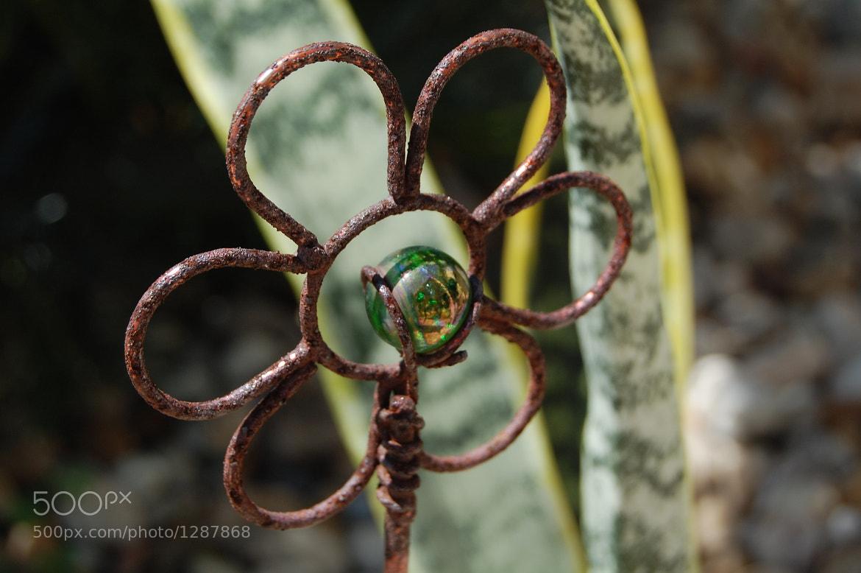Photograph garden variety by kristine boyce on 500px